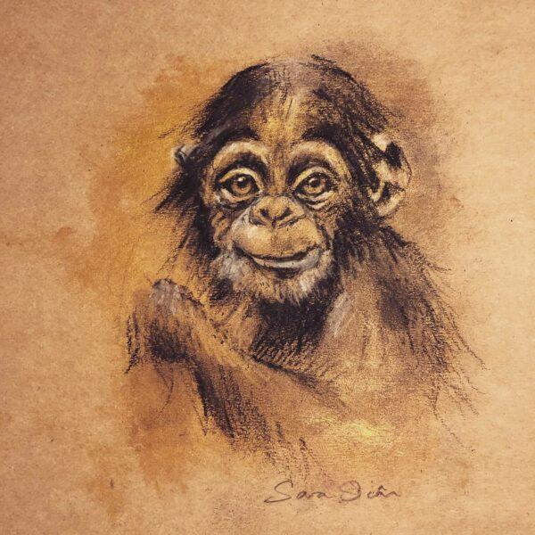 chimpanzee sketch for wildlife
