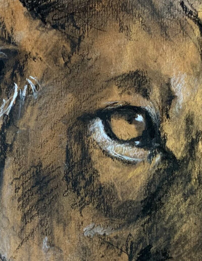 Wildlife art lioness Sara Sian close up