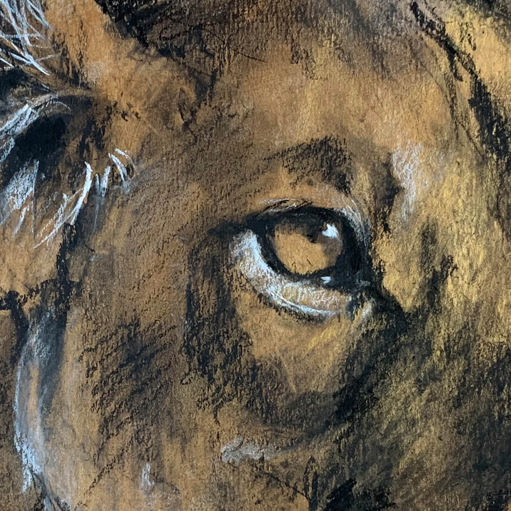 Wildlife art lioness Sara Sian close up