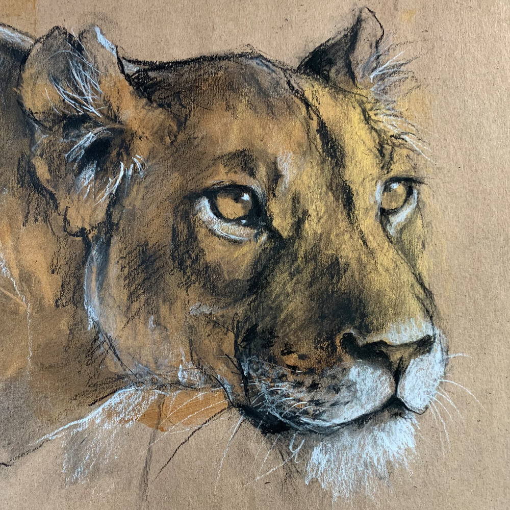 Wildlife art lioness Sara Sian cropped