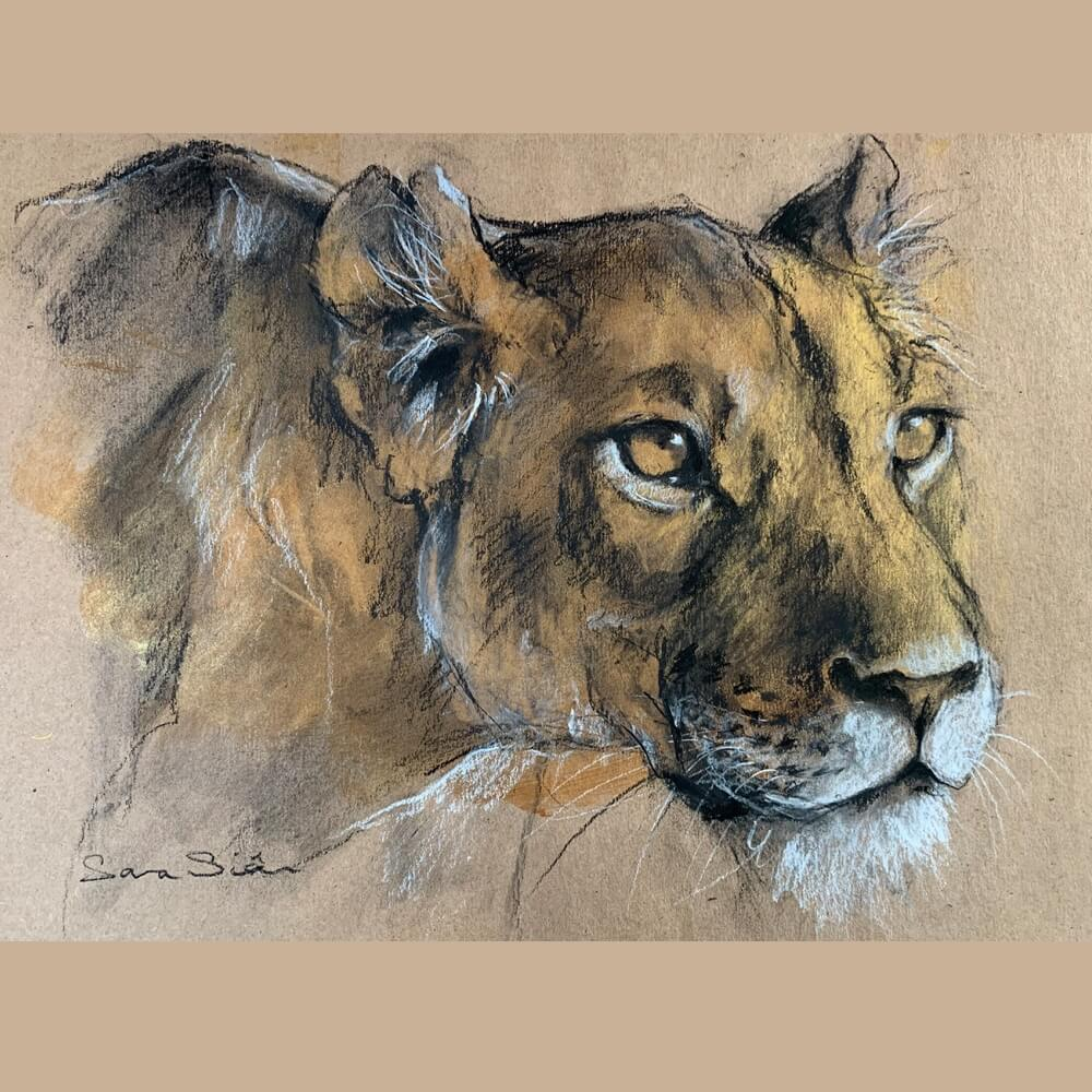 Wildlife art lioness Sara Sian