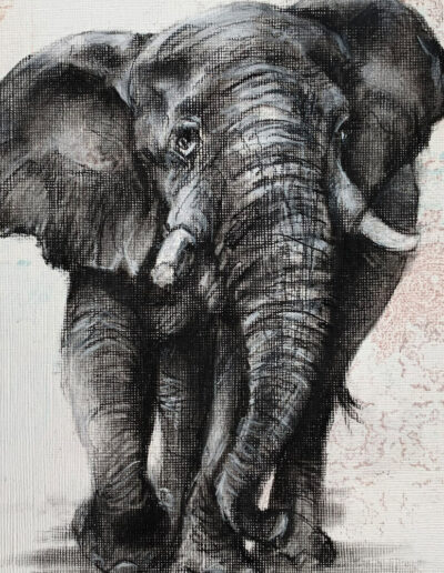 charcoal sketch of elephant Wildlife art Sara Sian