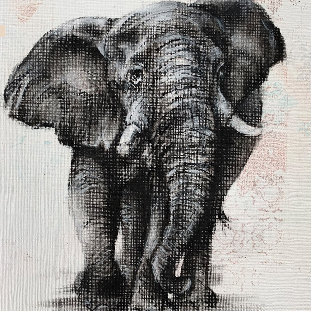 charcoal sketch of elephant Wildlife art Sara Sian