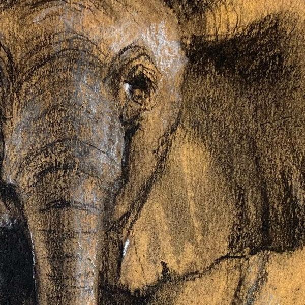 Wildlife art Elephant sketch Sara Sian