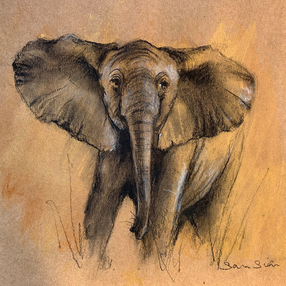 Wildlife art Elephant Sketch Sara Sian
