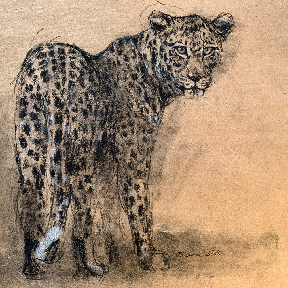Wildlife art Leopard Sara Sian