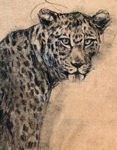 Wildlife art Leopard Sara Sian Close Up