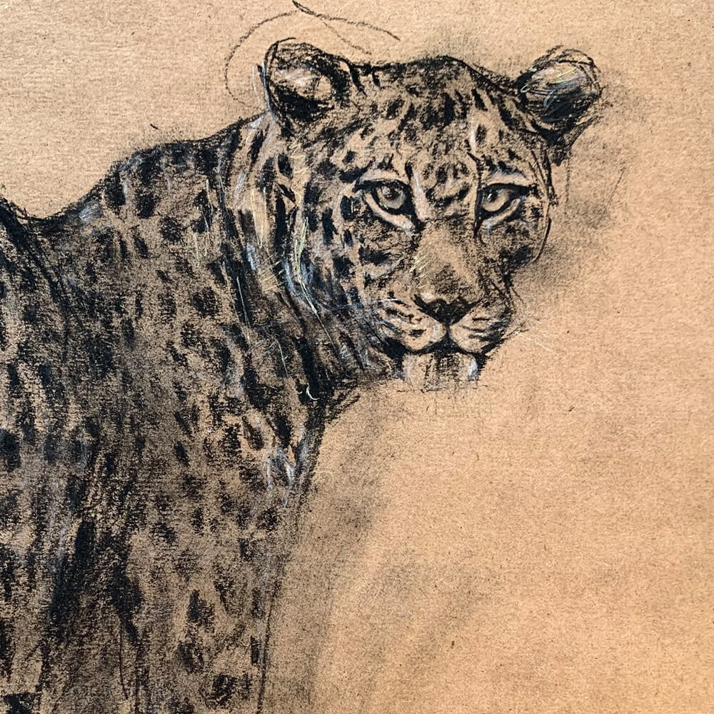 Wildlife art Leopard Sara Sian Close Up