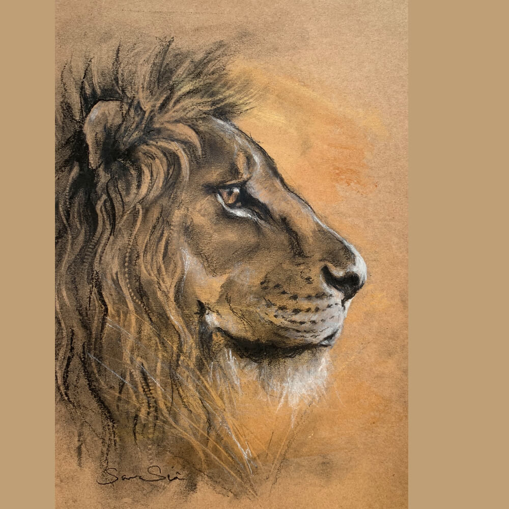 Wildlife art Lion sketch Sara Sian