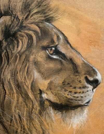 Wildlife art Lion sketch Sara Sian square