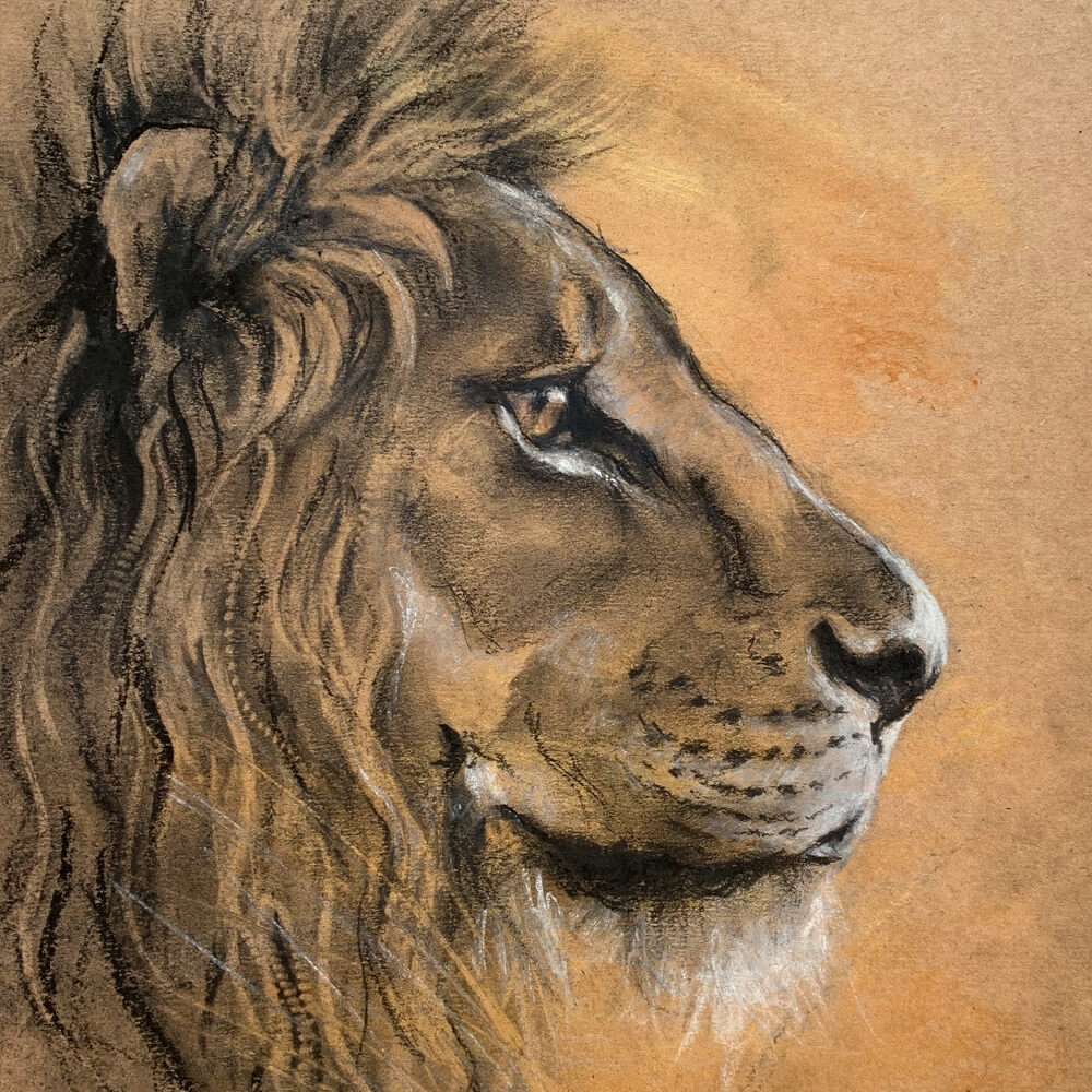Wildlife art Lion sketch Sara Sian square