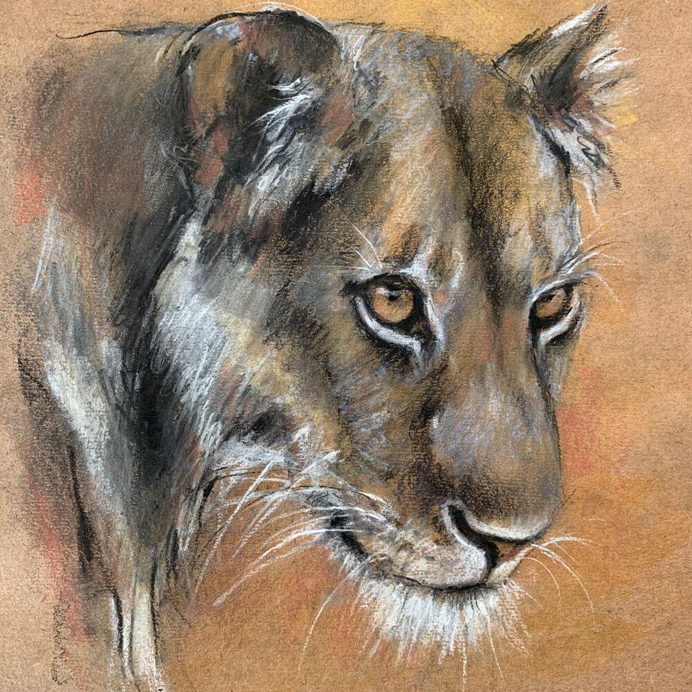 Wildlife art lioness sketch Sara Sian