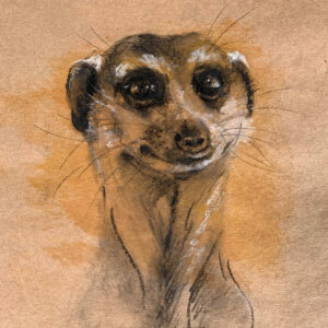 Wildlife art meercat sketch Sara Sian square