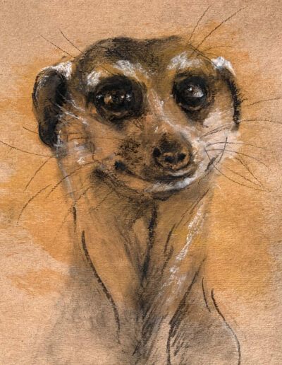 Wildlife art meercat sketch Sara Sian square